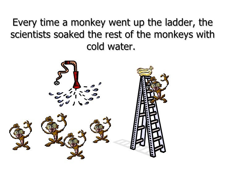 Every time a monkey went up the ladder, the scientists soaked the rest of the monkeys with cold water.