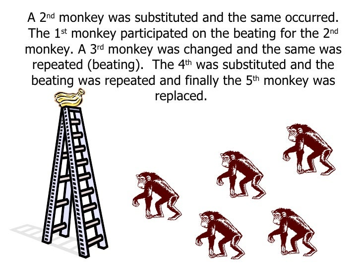 A 2 nd  monkey was substituted and the same occurred. The 1 st  monkey participated on the beating for the 2 nd  monkey. A...