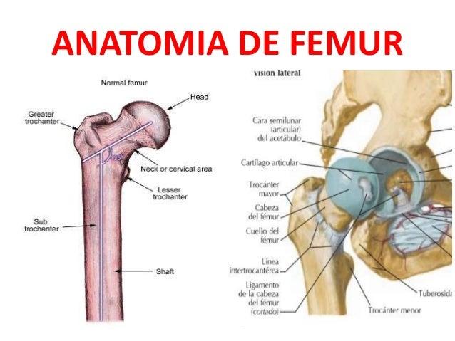 Fémur y Fracturas más comunes.