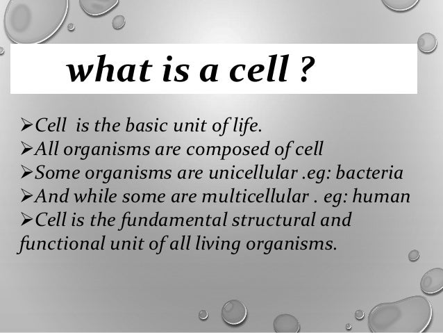 fundamental unit of life Cbse class 9 biology worksheet - fundamental unit of life, download pdf worksheet for biology and ncert solutions classes 1, 2, 3, 4, 5, 6, 7, 8, 9, 10, 11, 12.