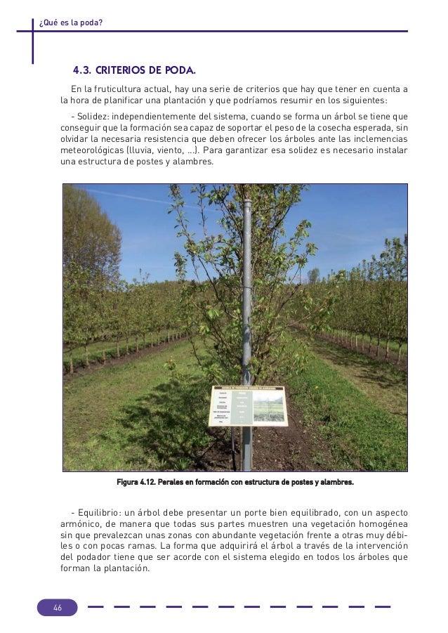 Evolucion de la fruticultura y poda de los arboles frutales for Cuando se podan los arboles frutales