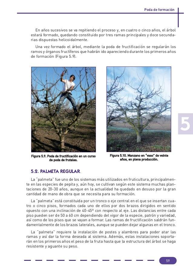Cuando se podan las oliveras amazing stunning excellent with como podar un jacinto with como - Cuando se plantan los arboles frutales ...