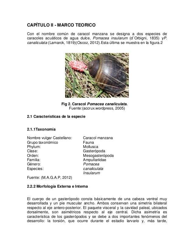 Increíble Anatomía De La Manzana Friso - Anatomía de Las Imágenesdel ...