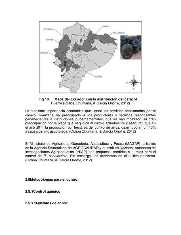 Vistoso Manzana Anatomía Caracol Bosquejo - Imágenes de Anatomía ...