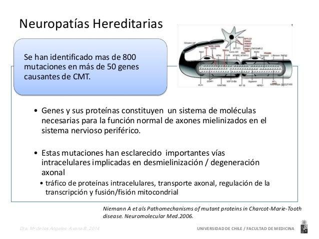 Neuropatías Hereditarias  Se han identificado mas de 800  mutaciones en más de 50 genes  causantes de CMT.  • Genes y sus ...