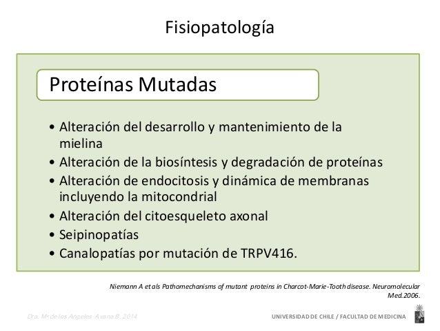 Fisiopatología  Proteínas Mutadas  • Alteración del desarrollo y mantenimiento de la  mielina  • Alteración de la biosínte...