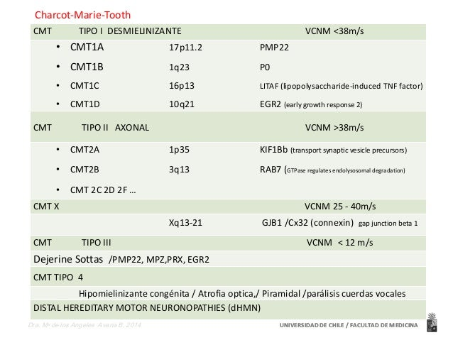 Charcot-Marie-Tooth  CMT TIPO I DESMIELINIZANTE VCNM <38m/s  • CMT1A 17p11.2 PMP22  • CMT1B 1q23 P0  • CMT1C 16p13 LITAF (...