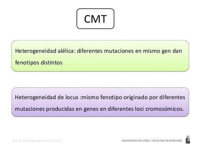 CMT  Heterogeneidad alélica: diferentes mutaciones en mismo gen dan  fenotipos distintos  Heterogeneidad de locus :mismo f...