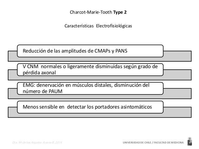 Charcot-Marie-Tooth Type 2  Características Electrofisiológicas  Reducción de las amplitudes de CMAPs y PANS  V CNM normal...
