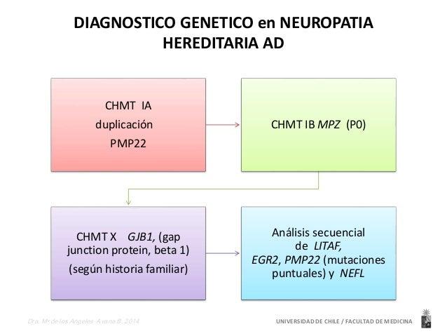 DIAGNOSTICO GENETICO en NEUROPATIA  HEREDITARIA AD  CHMT IA  duplicación  PMP22  CHMT IB MPZ (P0)  CHMT X GJB1, (gap  junc...
