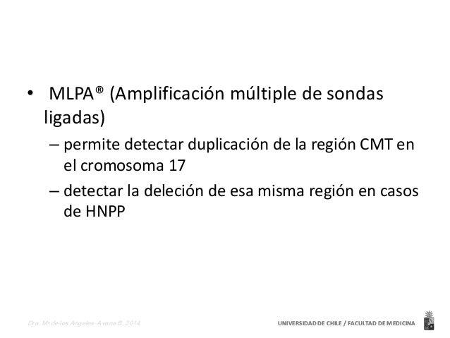 • MLPA® (Amplificación múltiple de sondas  ligadas)  – permite detectar duplicación de la región CMT en  el cromosoma 17  ...