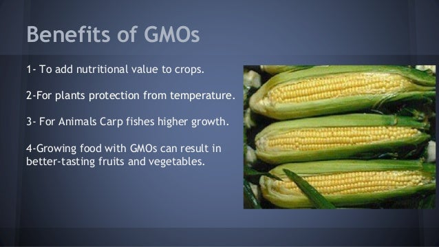the harmful effects of gmos One of the potential health risks of genetically modified food is allergies to genetically modify a food, scientists take genes from one food to put into another food this can cause allergic reactions and other side effects when people consume the modified foods for example, in 1996 soybeans were .