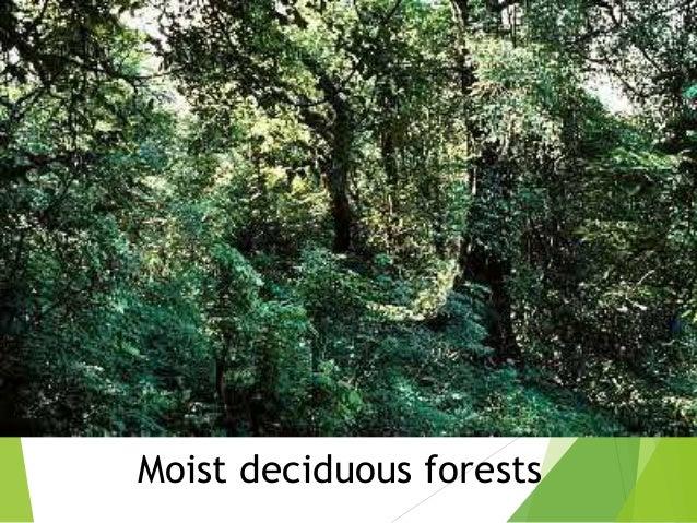 natural vegetation and wildlife pdf