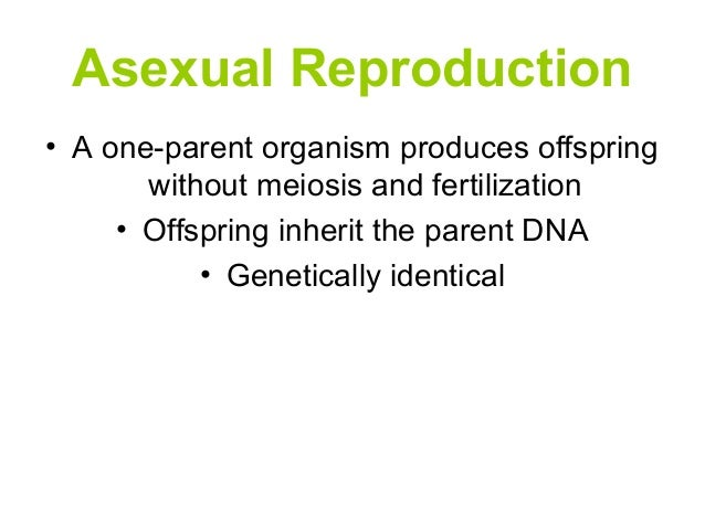 Asexual reproduction produces offspring genetically identical to the parent