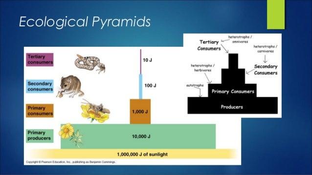 Single species models for many species food webs