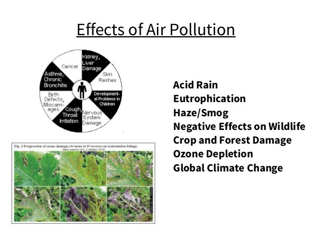 Effects of Air Pollution Acid Rain Eutrophication Haze/Smog Negative Effects on Wildlife Crop and Forest Damage Ozone Depl...