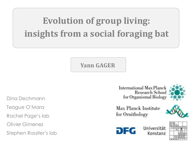Evolution of group living: insights from a social foraging bat Dina Dechmann Teague O'Mara Rachel Page's lab Olivier Gimen...