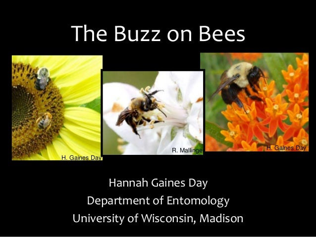 The Buzz on Bees Hannah Gaines Day Department of Entomology University of Wisconsin, Madison H. Gaines Day H. Gaines DayR....