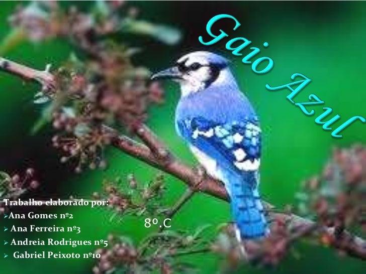 Gaio Azul<br />Trabalho elaborado por:<br /><ul><li>Ana Gomes nº2