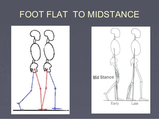 MIDSTANCE TO HEEL OFF (frontal plane analysis) Joint Motion Pelvis Pelvis moving posteriorly form neutral position Hip Lat...