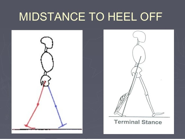 HEEL OFF TO TOE OFF (frontal plane analysis) Joint Motion pelvis Contralateral side moving forward unless contralateral he...
