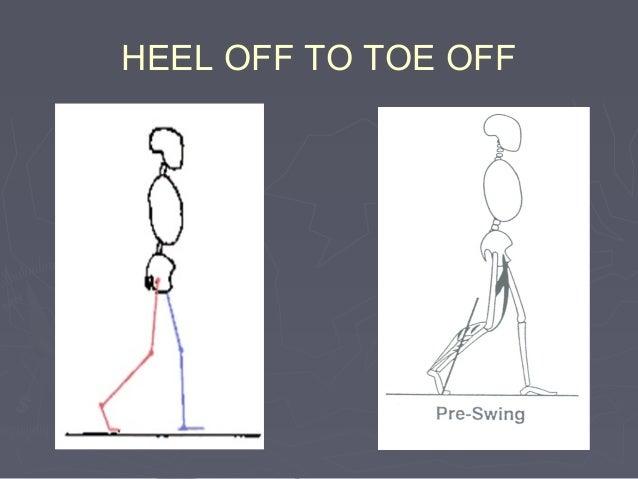((3)3) Knee flexion in stance phaseKnee flexion in stance phase::  Approx. 20o dipApprox. 20o dip  Shortens the leg in t...
