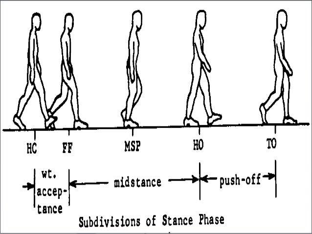 ► Step length Distance between corresponding successive points ofDistance between corresponding successive points of heel ...