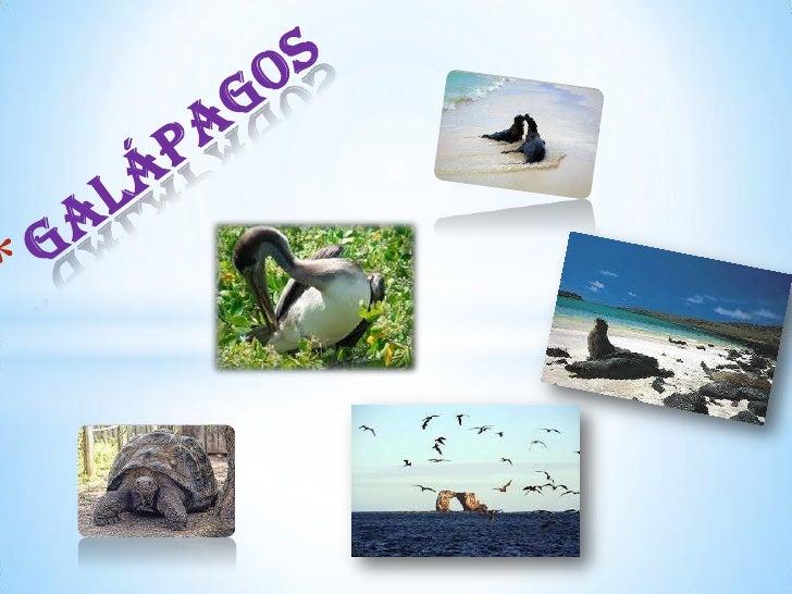 * galápagosLas islas Galápagos (también islas de los Galápagos y oficialmentearchipiélago de Colón) constituyen un archipi...