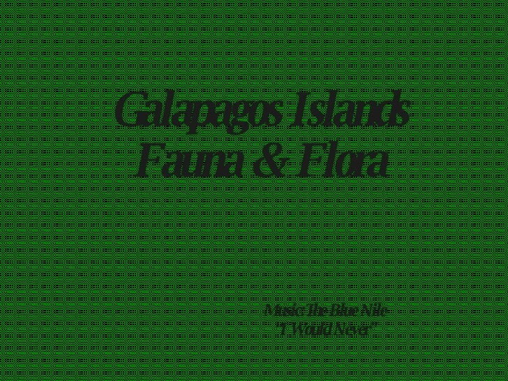 "Galapagos Islands Fauna & Flora Music:The Blue Nile "" I Would Never"""