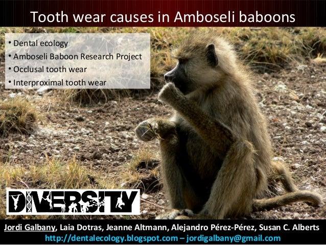 Jordi Galbany, Laia Dotras, Jeanne Altmann, Alejandro Pérez-Pérez, Susan C. Alberts http://dentalecology.blogspot.com – jo...