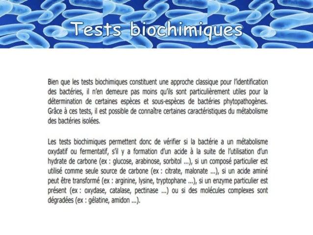 """Identification  des bactéries """"Galerie biohimique """"API"""" Slide 2"""