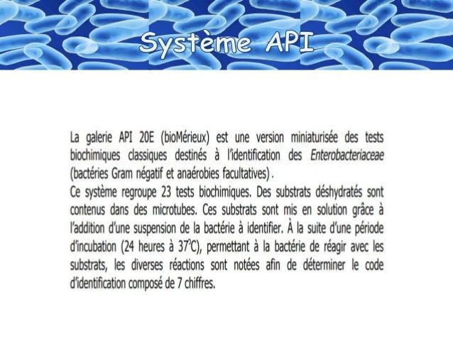 """Identification  des bactéries """"Galerie biohimique """"API"""" Slide 3"""