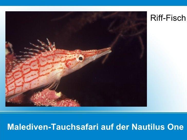 Malediven-Tauchsafari auf der Nautilus One Riff-Fisch