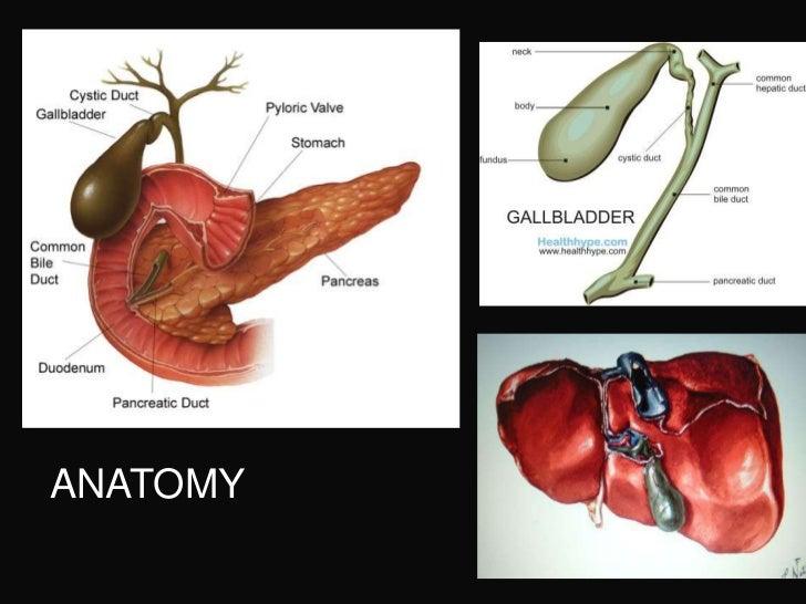 Gallbladder Extrahepatic Biliary Tree