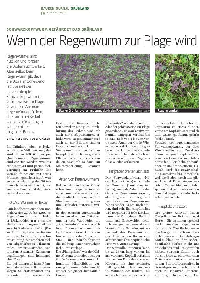 Bauernjournalgrünland IV Ausgabe 3/2015 Regenwürmer sind nützlich und fördern die Bodenfruchtbarkeit. Aber selbst beim R...