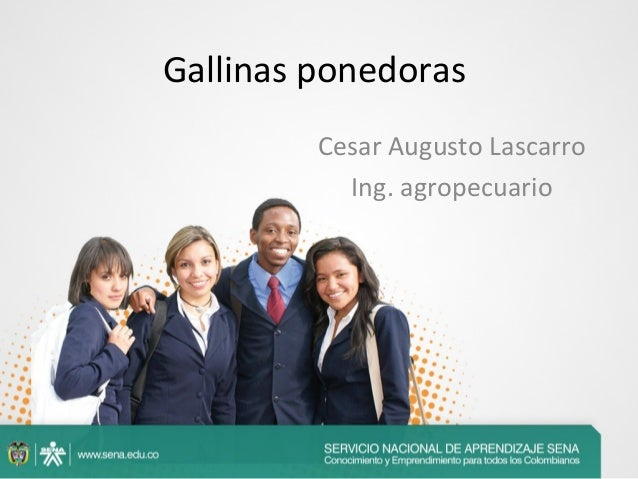 Gallinas ponedoras Cesar Augusto Lascarro Ing. agropecuario