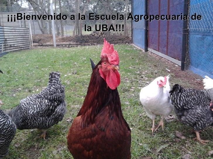 ¡¡¡Bienvenido a la Escuela Agropecuaria de la UBA!!!
