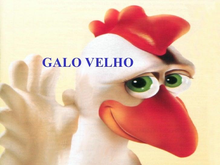 GALO VELHO