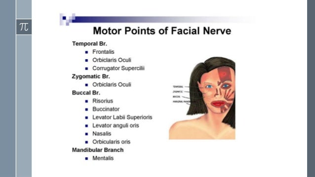 Facial muscle stimulation electrical