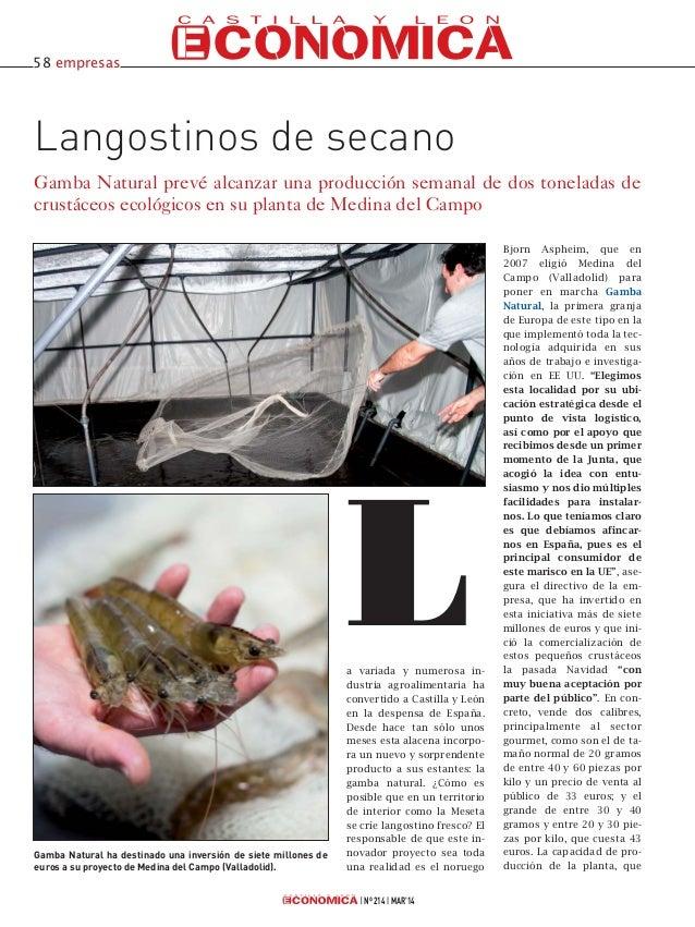 Nº 214 MAR'14 Langostinos de secano Gamba Natural prevé alcanzar una producción semanal de dos toneladas de crustáceos eco...
