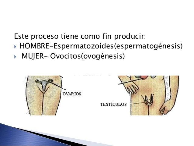 Este proceso tiene como fin producir:  HOMBRE-Espermatozoides(espermatogénesis)  MUJER- Ovocitos(ovogénesis)