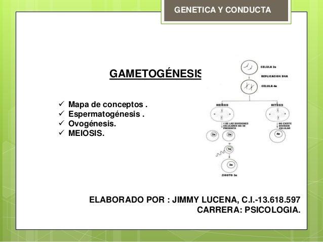 GENETICA Y CONDUCTA GAMETOGÉNESIS  Mapa de conceptos .  Espermatogénesis .  Ovogénesis.  MEIOSIS. ELABORADO POR : JIMM...