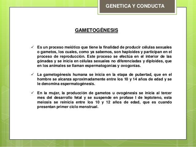 Gametogenesis Slide 2