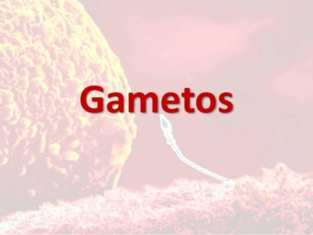 Gametos