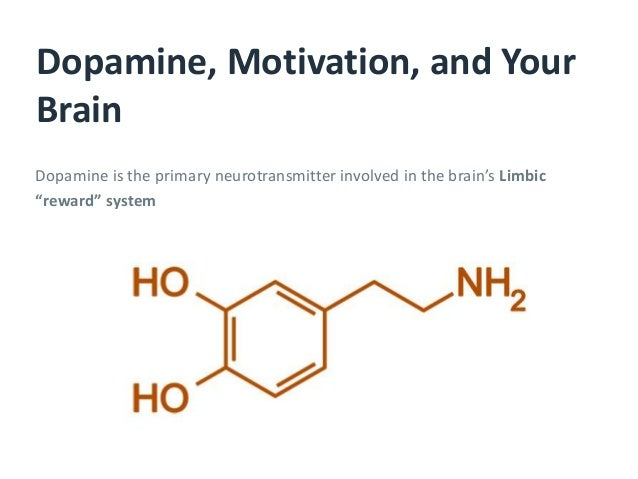 """Dopamine is the primary neurotransmitter involved in the brain's Limbic """"reward"""" system Dopamine, Motivation, and Your Bra..."""