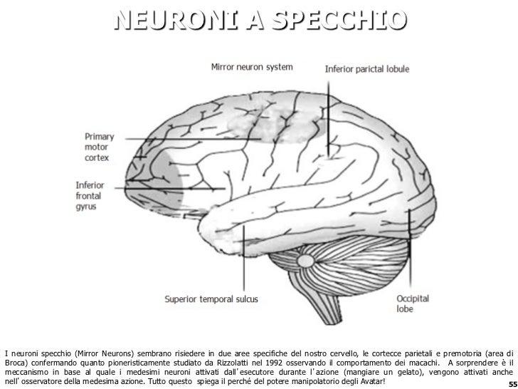 Fabio viola gamification nella vita quotidiana for I neuroni specchio