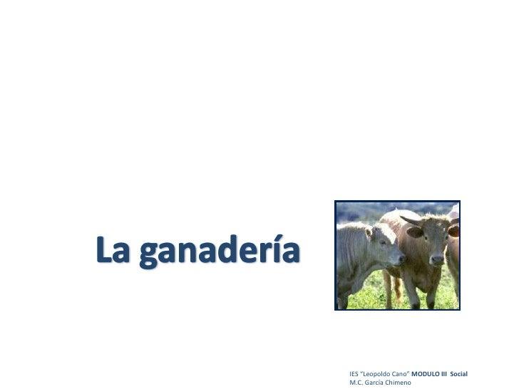 """IES """"Leopoldo Cano""""  MODULO III  Social M.C. García Chimeno"""