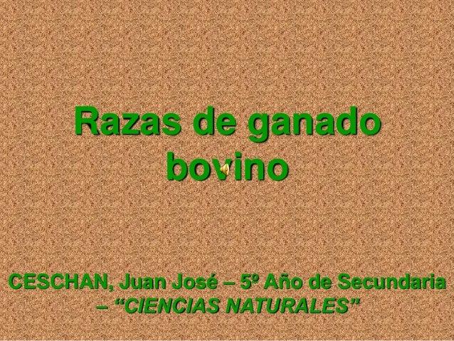 """Razas de ganado bovino CESCHAN, Juan José – 5º Año de Secundaria – """"CIENCIAS NATURALES"""""""