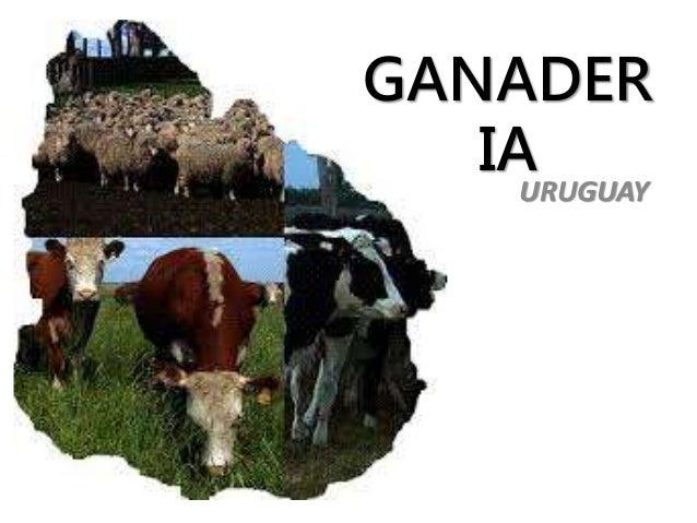 GANADER  IA  URUGUAY