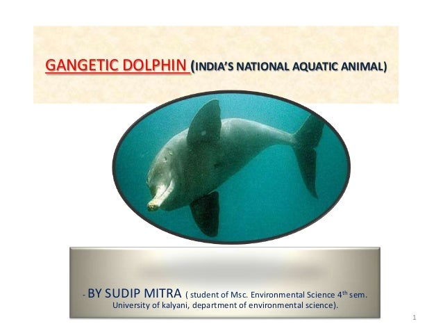 GANGETIC DOLPHIN (INDIA'S NATIONAL AQUATIC ANIMAL) - BY SUDIP MITRA ( student of Msc. Environmental Science 4th sem. Unive...